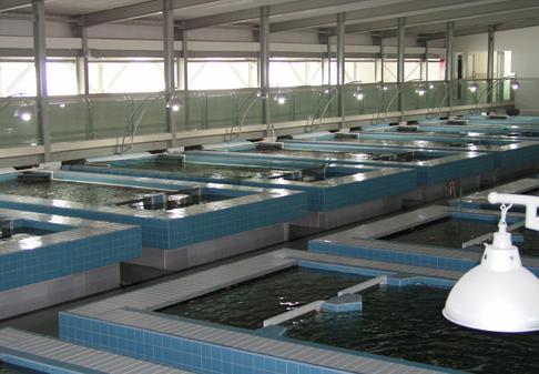 亚博体育yabo88亚博体育官方网在水产养殖与加工行业的